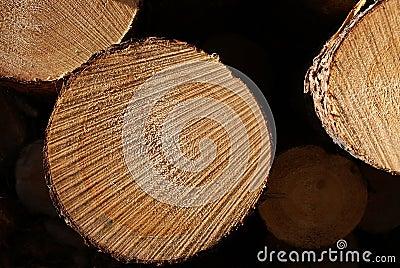 Pine Logs Stacked Macro