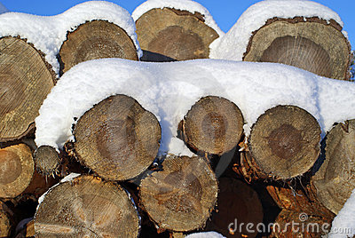 Pine Logs Under Snow