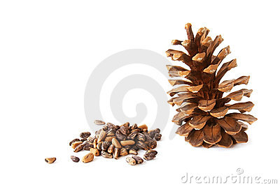 Pine nuts and a pine cone