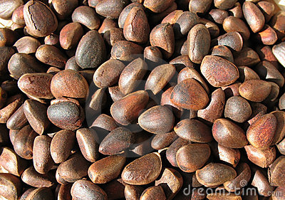 Pine nuts (seeds of Siberian pine)