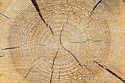 Pine sawn end texture