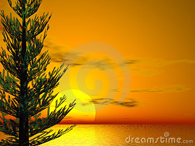 Pine Sunset Stock Photo