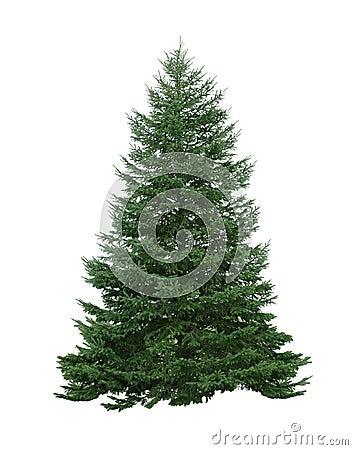 Free Pine Tree Stock Images - 12537554