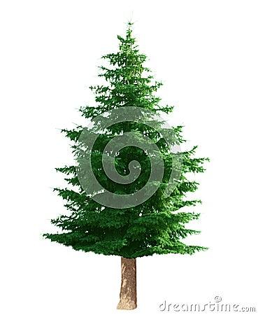 Free Pine Tree Stock Photo - 5481090