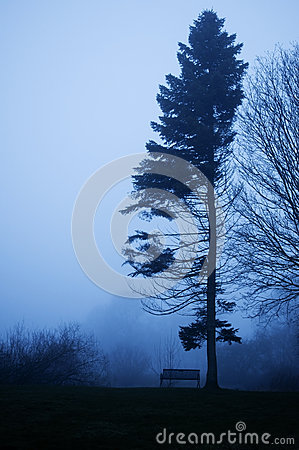 Pine tree and bench in foggy twilight.