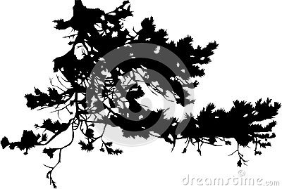 Pine tree branch silhouette