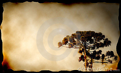 Pine tree in canvas