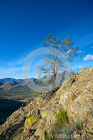 Pine Tree on Cliff