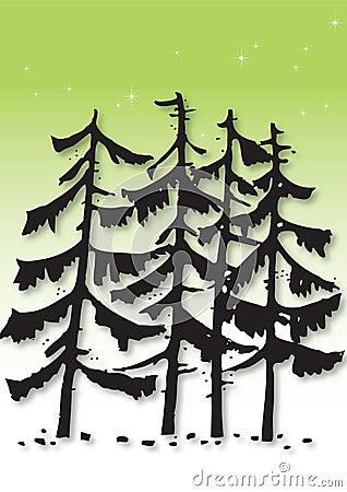 Pine tree illustration