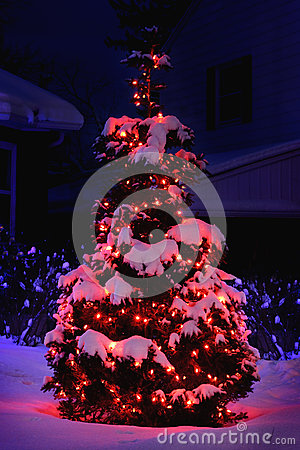 Pine tree lit for christmas with red lights