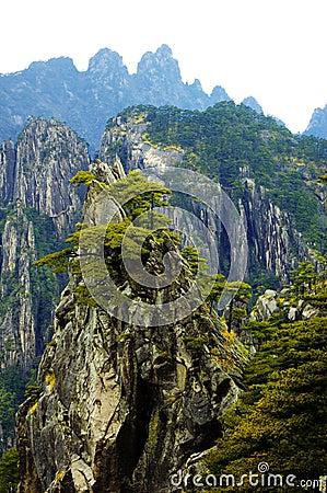 Free Pine Tree On Mountain Royalty Free Stock Photos - 5635088
