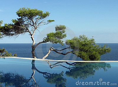 Pine-tree, pool and sea