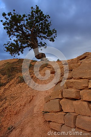 Pine tree and sandstone wall
