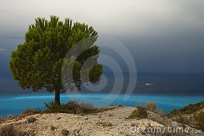 Pine tree on the seashore with azure water