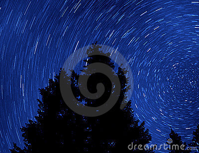Pine Tree and Startrails