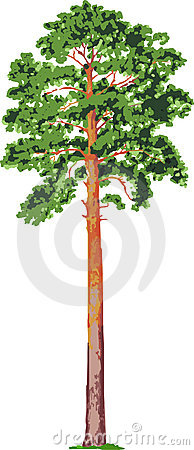 Pine tree. Vector Cartoon Illustration