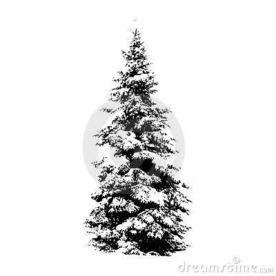 Free Pine Tree, Vector Illustration Royalty Free Stock Photos - 7486648