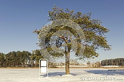 Pine tree in winter and empty billboard