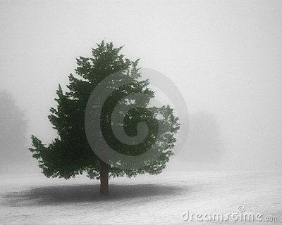 Pine tree in winter fog