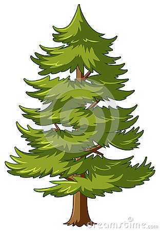 Free Pine Tree With Green Leaves Stock Photography - 99084012