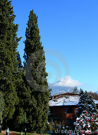 Pine trees against clear blue sky and mountains in Switzerland