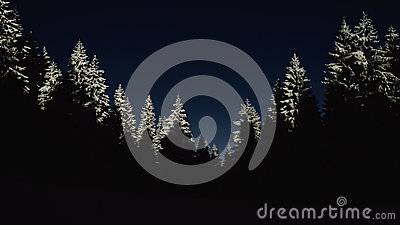 Pine Trees Covered By Snow During Night Time Free Public Domain Cc0 Image