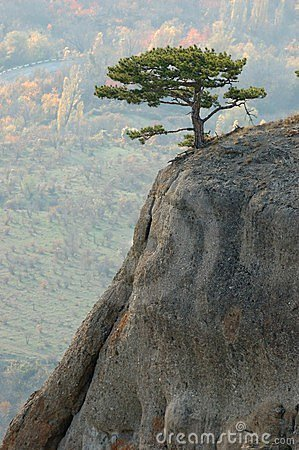Pine trees at Demirji rocks, Crimea