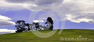 Pine trees on a green hill