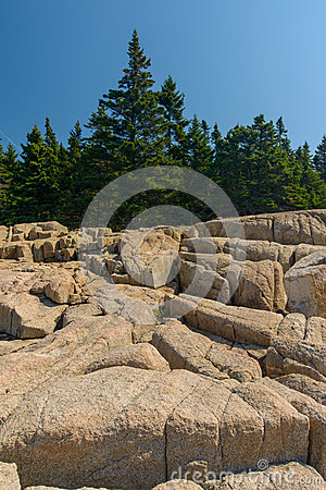 Free Pine Trees Growing On And Into The Pink Granite Slabs Of Rocks L Stock Image - 53781571