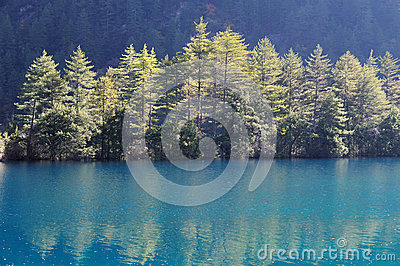 pine trees and lake in Jiuzhaigou
