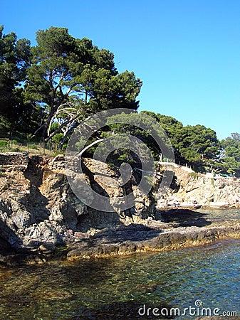 Pine trees and sea