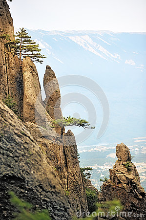 Pine trees on the steep cliffs