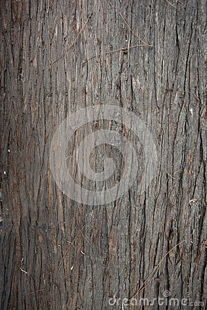 Pine trunk background