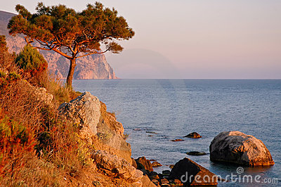 Pine wood on cliff while sea sundown