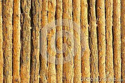 Pine wood wall