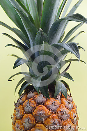 Pineapple Fruit Free Public Domain Cc0 Image