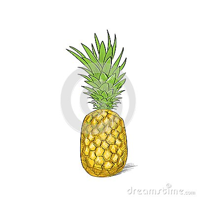 Free Pineapple Fruit Color Sketch Draw Isolated Over Stock Photo - 50492400
