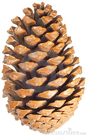 pine cones snow clip art