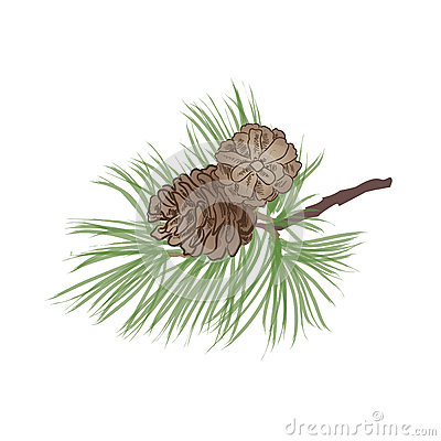 Free Pinecone Branch Isolated. Pine Tree Close Up Illustration Royalty Free Stock Images - 36137889