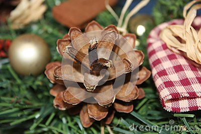 Pinecone with Guests