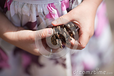 Pinecone in hands