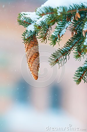 Free Pinecone Tree On Snow Royalty Free Stock Photo - 103199675