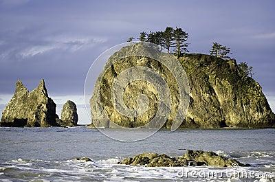 Pines on Ocean Rocks