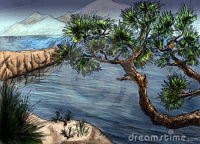 Pines over the sea - landscape