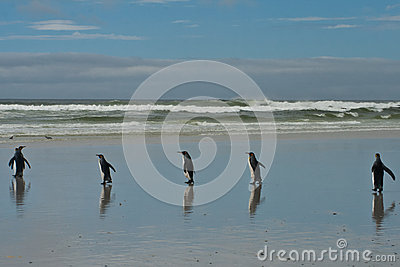 5 pingüinos de rey