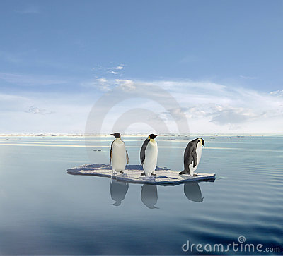 pingouins-sur-l-iceberg-de-fonte-thumb5280195