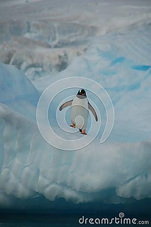 Pinguin auf Uhr