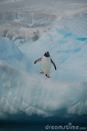 Pinguin on watch