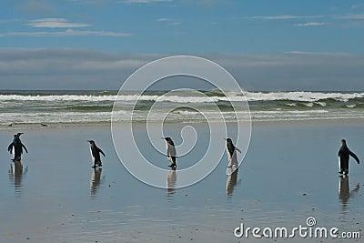 5 pinguins de rei
