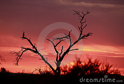 Pink African sunrise